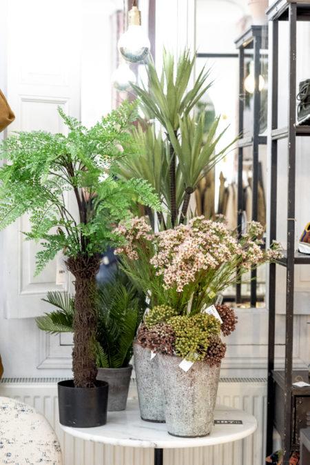 Plantas y flores